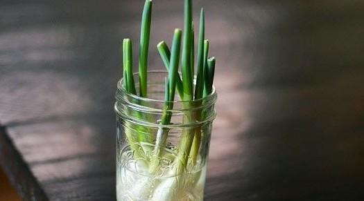 Tip: groenten stekken en vensterbanktuinieren